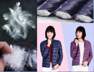 Mua áo lông vũ Uniqlo Nhật ở đâu uy tín giá rẻ